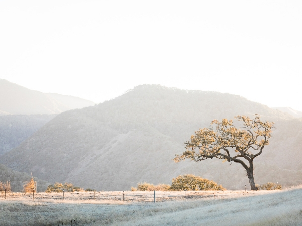 Elegant Destination Elopement at Kestrel Park - santa ynez equestrian